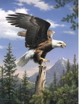 COLART 86239 SCREAMING BALD EAGLE ACRYLIC PAINT BY NUMBER (9 PULGX12 PULG)